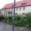 przeworcone drzewo stare miasto 1