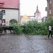 przeworcone drzewo stare miasto