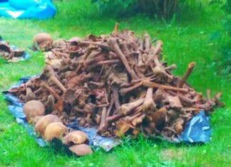 Odkryto ludzkie szczątki na Zatorzu [FOTO]