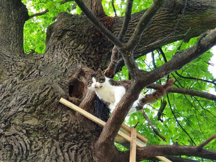 В польском городе Бартошице, на дереве уже более шести лет живет кот (ВИДЕО)