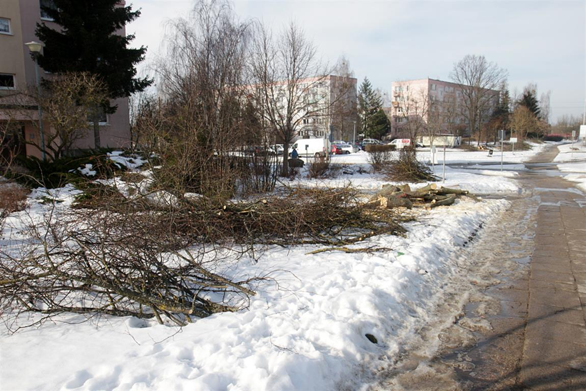 Rozpoczyna się wycinka drzew pod budowę linii tramwajowej